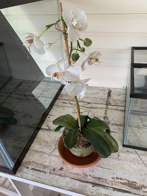 Silk orchid in a pot for Sale in Boca Raton, FL