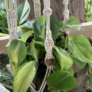 Plants De Sombra Pequeñas Con Colgadera for Sale in Downey, CA