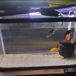 40 Gallons Fish Tank for Sale in Sacramento, CA