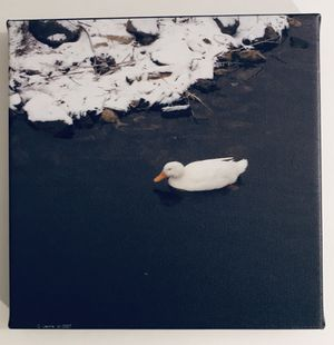 Snow Duck I for Sale in White Plains, MD