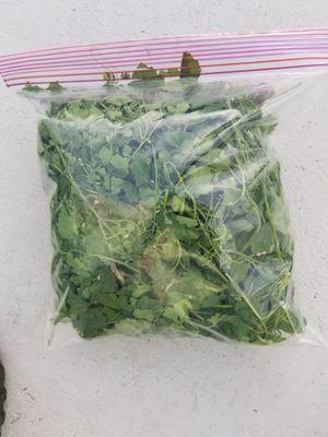 Cera seed 1 gallon bag $1 for Sale in Miramar, FL