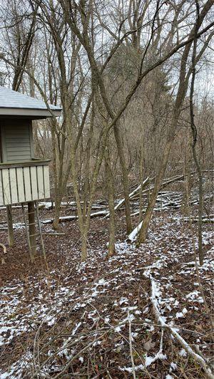 Free firewood. for Sale in Freeland, MI