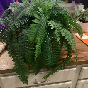 Large Fake Fern Plant for Sale in Mesa, AZ