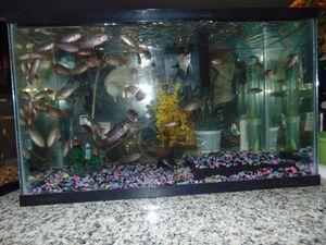 Aquarium extras for Sale in Las Vegas, NV