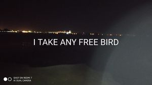 ANY FREE BIRDS for Sale in HILLTOP MALL, CA