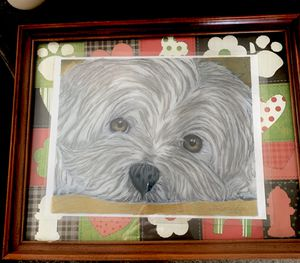 COLOR PORTRAITS OF CATS AND DOGS ETC.... for Sale in Pleasantville, OH
