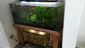 40 gallon aquarium for Sale in Santa Monica, CA