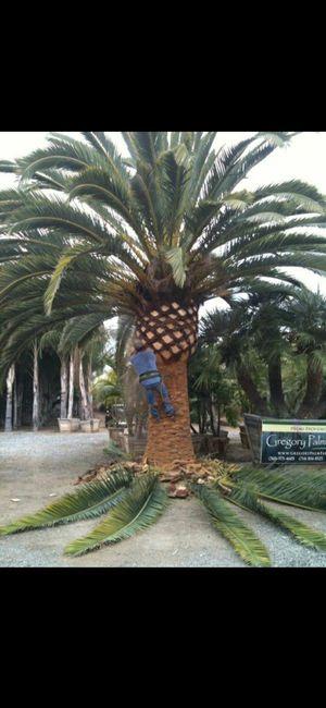 Palms for Sale in Pomona, CA