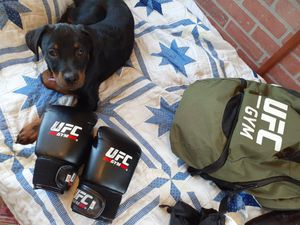 Special UFC boxing gloves for Sale in Largo, FL