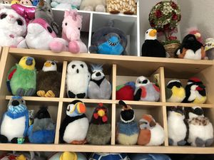 Bird collection for Sale in San Ramon, CA