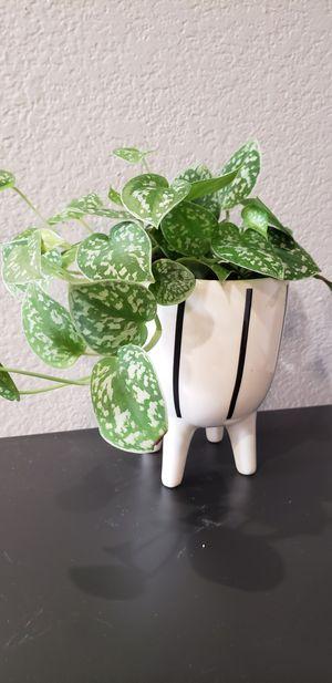 New Mid century modern white black stripe ceramic house plant pot planter. for Sale in Ontario, CA