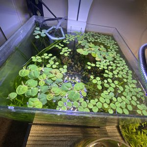 Live Aquarium Plants For A Fish Tank (Salvinia Minima, Red Root Floaters, Frog Bit, Dwarf Water Lettuce) for Sale in Hesperia, CA