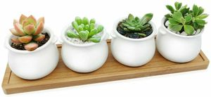 Mini Succulent Planters Set, White Modern Ceramic Round 4 Succulent Planter Pot with Drain Holes and Bamboo Tracy for Indoor Outdoor decor for Sale in Rolling Hills Estates, CA