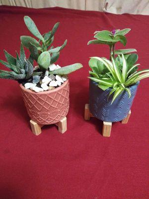 Succulents en macetitas de cerámica pequeños$6Each for Sale in Bell, CA