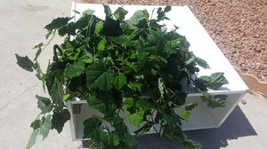 Fake Greenery Plant for Sale in Henderson, NV