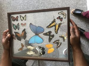 Butterfly Collection for Sale in Alexandria, LA