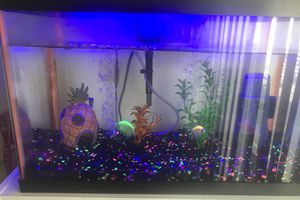 5 Gallon Fish Tank for Sale in La Mirada, CA