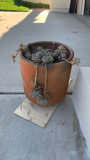 Succulent and pot-free for Sale in Encinitas, CA