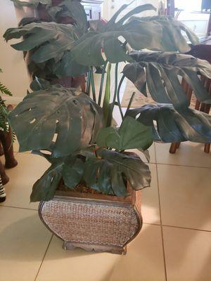 """Silk / Fake Plant in 12"""" Basket for Sale in Davie, FL"""