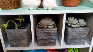Set of Succulents in Matching Square Planters (Four Total) for Sale in Phoenix, AZ