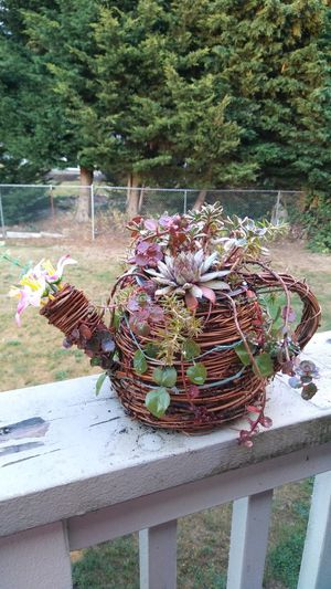 succulent wicker planter for Sale in Puyallup, WA