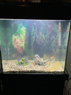 20 gallon tall aquarium complete set fish tank with stand and decorations for Sale in Tacoma,  WA