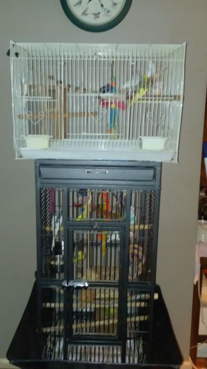 Bird and bird cages for Sale in Burlington, KY