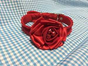 Dog collar for Sale in Gervais, OR