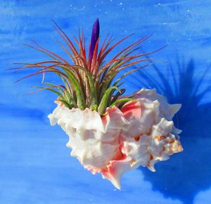 Set of 3 Air Plant Holders & Air plants, Houseplants for Sale in Las Vegas, NV