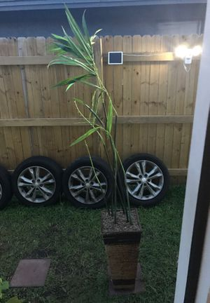 Decorative bamboo plant only 5 dollars!! for Sale in Kissimmee, FL
