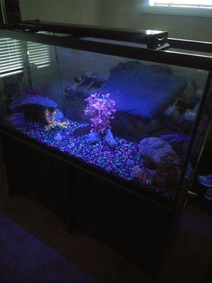 75gl tall fish tank for Sale in Las Vegas, NV