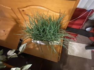 Fake plants 5 for Sale in Dade City, FL