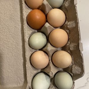 Farm Fresh Eggs for Sale in Troutdale, OR