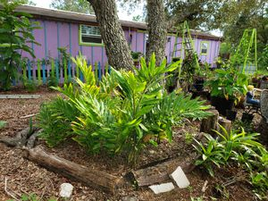 plants, plants, plants and more plants for Sale in Spring Hill, FL