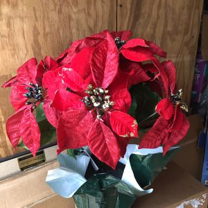 Potted En Pot Christmas Poinsettias for Sale in Dallas, TX