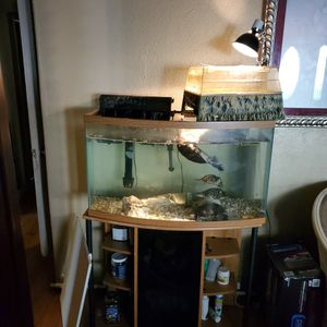 Turtle Tank + Set Up for Sale in San Jose, CA