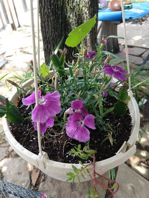 Plants for Sale in Frisco, TX