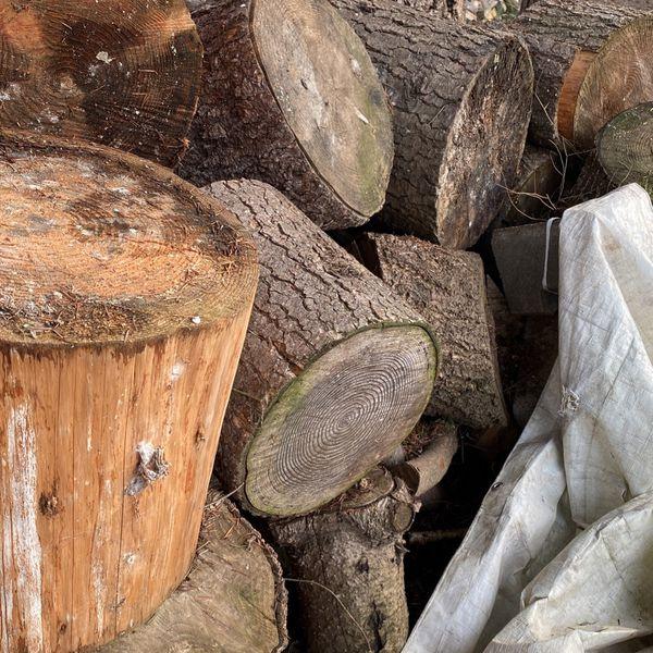 Free Wood Tree Trucks