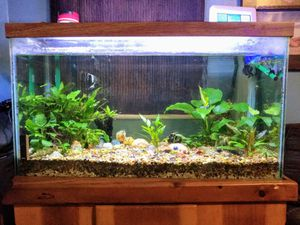 Fish Tank With Stand 29Gallon for Sale in Portland, OR