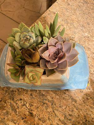 Succulent blue ceramic beetle planter for Sale in Fontana, CA