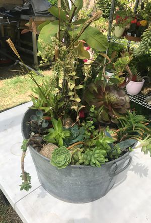 One giant pot with succulent plants mix for Sale in Hacienda Heights, CA