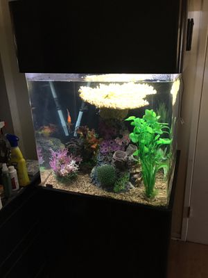 60 gallon acrylic cube aquarium with stand for Sale in Highland, CA