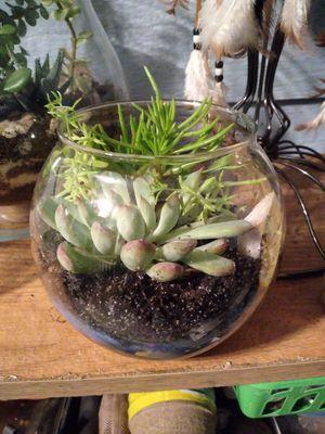 Succulent terrarium for Sale in Covington, GA
