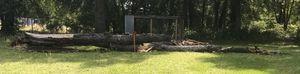 Fallen Tree for Sale in Bullard, TX