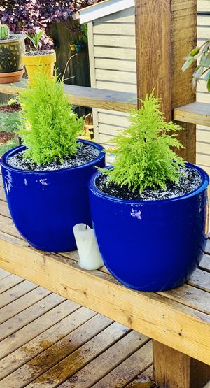 Price is for pair—Live outdoor Lemon Cypress plant trees in a ceramic planter flower pot—firm price for Sale in Seattle, WA