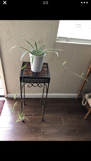 Spider plant for Sale in Hayward, CA