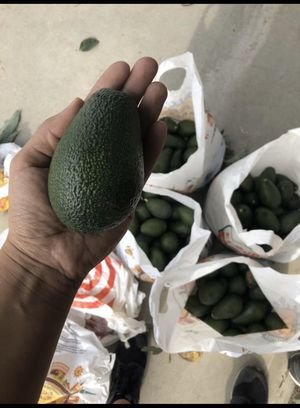 Avocados for Sale in Fontana, CA