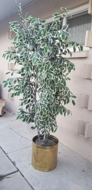 6ft silk tree in brass container for Sale in Las Vegas, NV