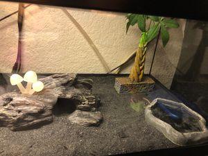 Geckos for Sale in San Jose, CA