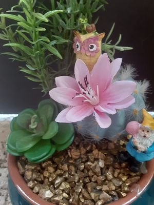 Very cute succulent garden for Sale in Mesa, AZ